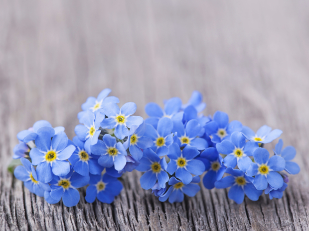 Book a massage with Forget Me Knot Massage Therapy ...