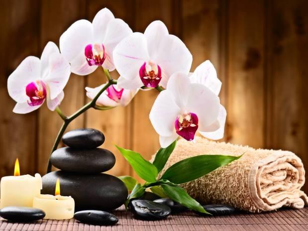 Book a massage with cindy 39 s spa lancaster pa 17603 for 717 salon lancaster pa